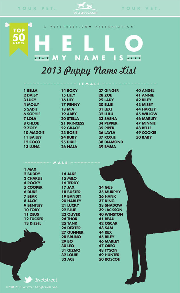 Puppy names 2013